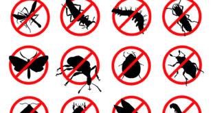 شركة مكافحة حشرات بالرياض بجده بالدمام بالخرج بتبوك بينبع