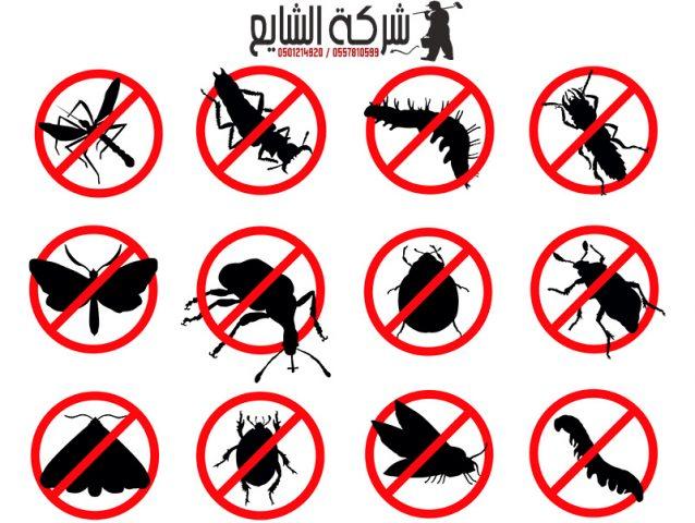شركة مكافحة حشرات بالرياض 0554460463 تخلص من جميع انواع الحشرات