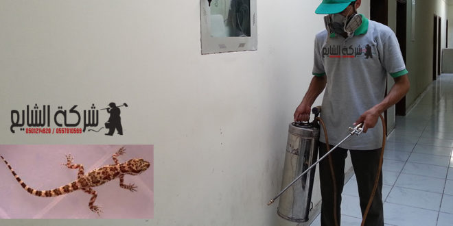 مكافحة البرص 0501214920 افضل شركة مكافحة الحشرات المنزلية بالرياض بجده بالدمام