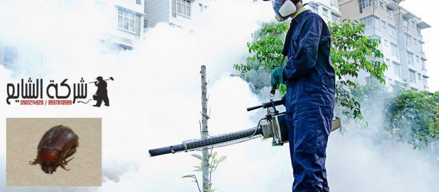 مكافحة العته بجده 0501214920 افضل شركات رش المبيدات الحشرية بالرياض