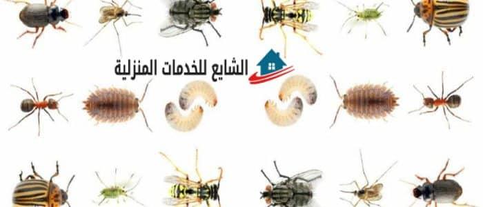 نصائح للتخلص من الحشرات بدون ضرر على صحتك